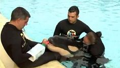 Young orca dies at Loro Parque in Tenerife