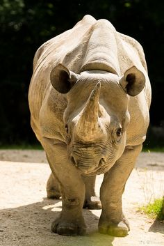 Rhino by Cloudtail, via Flickr