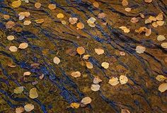 Leaves on Slickrock, Autumn, Zion by Charles Cramer