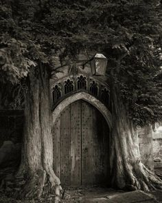 "Beth Moon : ""PORTRAITS OF TIME    Many of the trees I have photographed have survived because they are out of reach of civilization; on mountainsides, private estates, or on protected land. Certain species exist only in a few isolated areas of the world."""