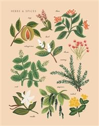 Herbs & Spices art print designed by Anna Bond for Rifle Paper Co.  Available now at Northlight Homestore