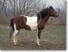 Horse Breeds, Country Of Origin, Trekking, Around The Worlds, Colours, Horses, Gallery, Animals, Animales