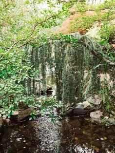 A weeping Atlas Cedar (Cedrus atlantica 'Glauca Pendula') hangs gracefully over one of the ponds. Photo – Kate Ballis for The Design Files.