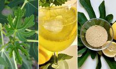 Használd a füge levelét is, készíts belőle szörpöt! | Hobbikert Magazin Izu, Cantaloupe, Fruit, Gardening, Lemonade, Garten, Lawn And Garden, Garden, Square Foot Gardening
