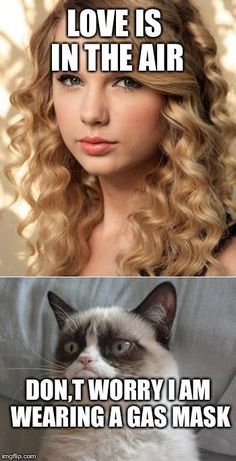 Grumpy Cat says no Grumpy Cat says no to Taylor Swift as NYC Global Welcome - Funny Cat Quotes Grumpy Cat Quotes, Grump Cat, Funny Grumpy Cat Memes, Funny Animal Jokes, Cat Puns, Cat Jokes, Cute Funny Animals, Funny Animal Pictures, Funny Cats