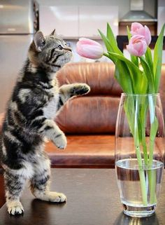 Always take time to smell the flowers...