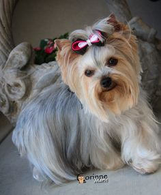Corinne just back from the doggie spa!
