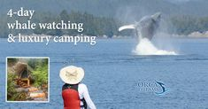 4-day luxury whale watching tours off Vancouver Island. Sea kayak with killer whales, catch your own dinner, watch humpback whales feed.