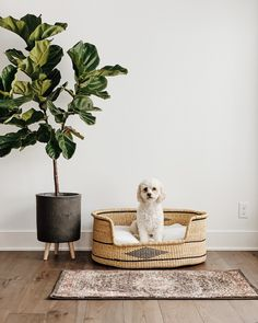 Shop our collection of unique and natural dog beds and baskets. Designed and made by ZuriRose & Co, each dog bed is completely woven by hand and sure to last a long time. Dog Home Decor, Pet Home, Cool Dog Beds, Unique Dog Beds, Diy Dog Bed, Puppy Beds, Puppy Playpen, Dog Bedroom, Dog Furniture