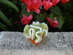 Opuntia cristata