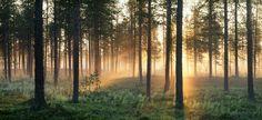 Norrland, sommar. Ljuset.