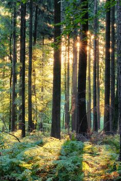 """""""The sacred stillness of an old growth forest. The paths are softer here..."""""""