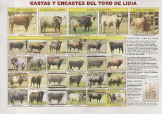 Castas y encastes del toro de lidia