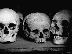 skulls | Tumblr