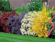 arbuste-de-haie-fleurie-extérieur-maison-toit-les-arbres-fleuries