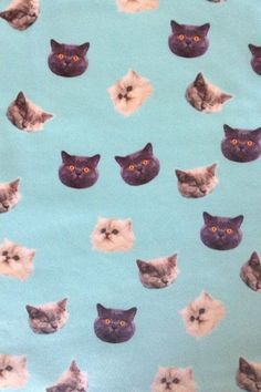 The perfect wallpaper for the Crazy Cat Lady house! Or sheets, or curtains or…… Die perfekte Tapete für das Crazy Cat Lady Haus! Crazy Cat Lady, Crazy Cats, Cat Wallpaper, Pattern Wallpaper, Interior Wallpaper, Iphone Wallpaper, Cute Pattern, Pattern Art, Kawaii