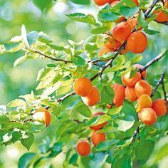 Forest Garden, Edible Garden, Fruit Trees, Ecology, Home And Garden, Gardening, Vegetables, Chata, Chicken