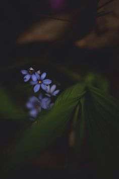 Emilie Whitcher - Photography, Landscape photography, Photography tips Acid Wallpaper, Nature Iphone Wallpaper, Flower Wallpaper, Wallpaper Backgrounds, All Nature, Flowers Nature, Beautiful Flowers, Nature Aesthetic, Flower Aesthetic