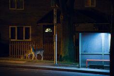 Urban wildlife – in pictures