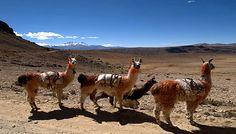Cañón Colca - Arequipa, Perú