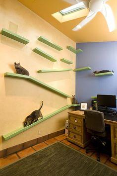 V domě kalifornského stavitele žije přes tucet koček.