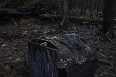 #Hidden home in the white birch #Michigan #swamp.
