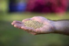 Ein schöner Rasen ist kein Hexenwerk. Der Grundstein dafür wird schon bei der Aussaat gelegt – indem man beim Kauf einer Rasensamen-Mischung auf gute Qualität achtet. #rasensamen #rasen