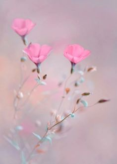 Pink flowers bring pops of cheer to any space. Learn about types of pink flowers and see pink flower images to help you find your perfect plant. My Flower, Pretty Flowers, Pink Flowers, Flowers Pics, Cosmos Flowers, Wonderful Flowers, Cut Flowers, Jolie Photo, Flower Pictures
