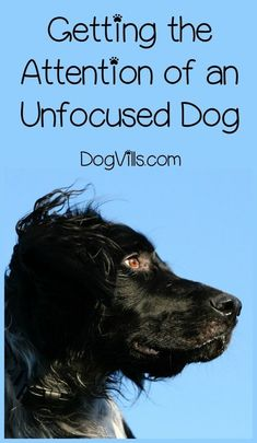 US $1.89 40% OFF 30ML… #dogtrainingcourse Dog Training Methods, Dog Training Techniques, Training Your Puppy, Training Dogs, Crate Training, Training Plan, Potty Training, Labrador Retriever, Dog Minding