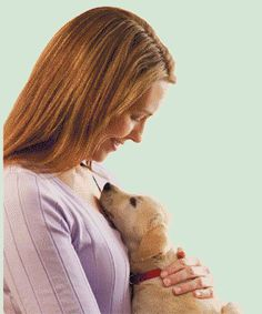 Pet Insurance Cost: Discounts and Shopping