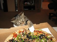 Funny cat video. No, kitty! This is my pizza