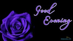 Good Evening Sms, Good Evening Messages, Good Evening Greetings, Cute Good Night Quotes, Morning Quotes Images, Evening Quotes, Tomorrow Will Be Better, Purple Roses, Good Morning