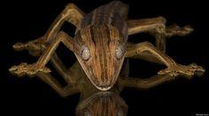 El espectacular mundo psicodélico de los bichos raros - BBC Mundo