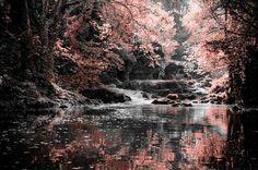 beauty, magic forest, mari18, pink, reflection, stream
