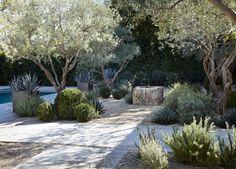Olive trees, sage, agave, pea gravel, stone. Shrader Design | Exterior Design