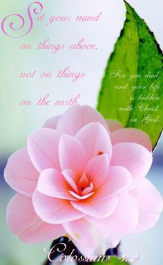 Colossians 3:2 Set your mind on things above, not on things on the earth. #Bible #quote