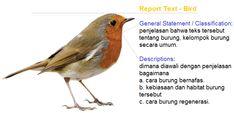 contoh report text generic structure tentang burung