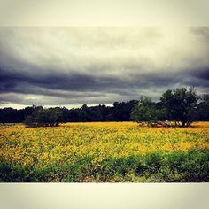 Spring in Texas brings beautiful wildflowers @ McKinney Falls State Park #CaptureTX