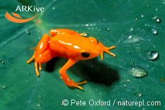 amphibians - Google Search