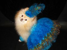 peacock dog costumes | her costume is a Las Vegas Showdog inspired by a Peacock. The costume ...