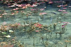 Discover Monet's Pond in Seki-shi, Japan: This pond is so stunning it looks like you've stepped into one of Monet's masterpieces. Claude Monet, Photo Wall Collage, Picture Wall, Monet Paintings, Art Prompts, Art Hoe, Arte Floral, Aesthetic Pictures, Painting & Drawing