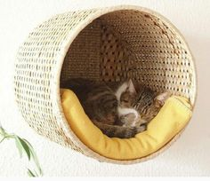 Attach a basket to the wall. Make sure to secure it properly. Put a blanket or…