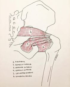 12 Best 0 - Hip surgery images   Health, Acdf surgery, After