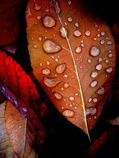 Bronzed Leaf  Rainy Day Raindrops Rusty Red Leaves Metallic Print Nature