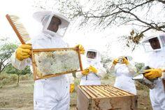 PERÚ: Unas 240 toneladas métricas de miel al año se producen en Lambayeque