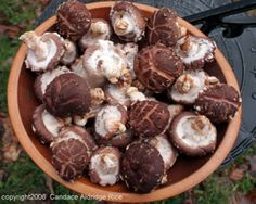 North Carolina Mushroom Growers Association... has mushroom information and recipes