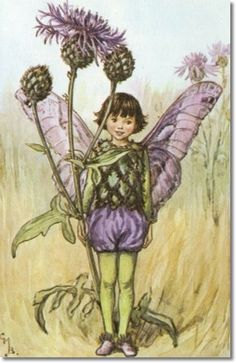 Flower Fairies of the Summer - The Greater Knapweed Fairy