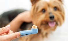 Dog Dental Tips | The Bark
