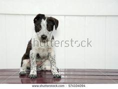 White Puppies, Black And White Dog, White Fence, Photo Black, Dark Wood, Stock Photos, Dogs, Animals, Animales