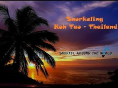 Snorkeling around Koh Tao Thailand 2017 Beautiful Islands, Beautiful Sunset, Beautiful Beaches, Undersea World, Best Snorkeling, Koh Phangan, Best Sunset, Koh Tao, Underwater World